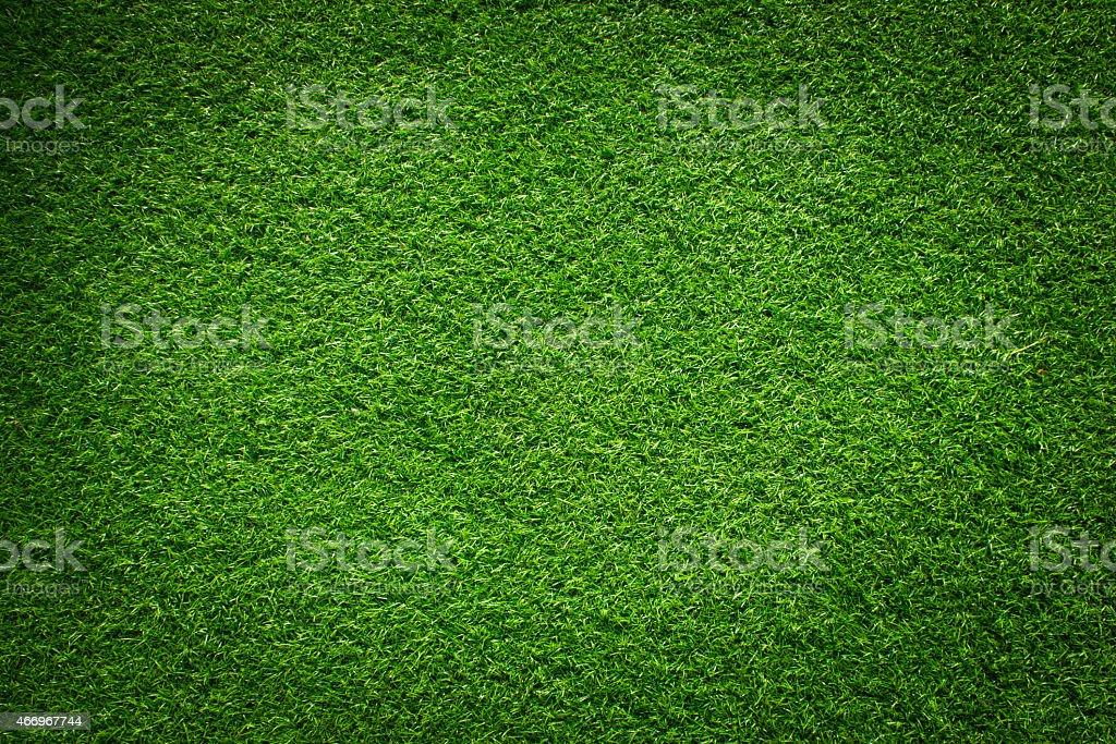 Fresh green grass stock photo