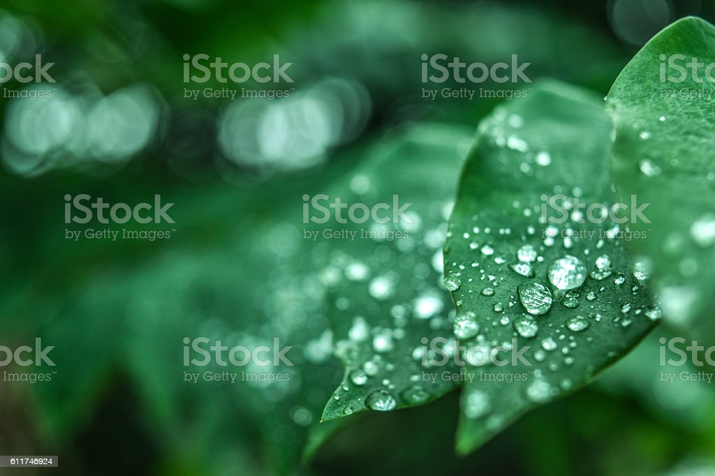 Fresh green grass with dew drops closeup. Nature Background stock photo