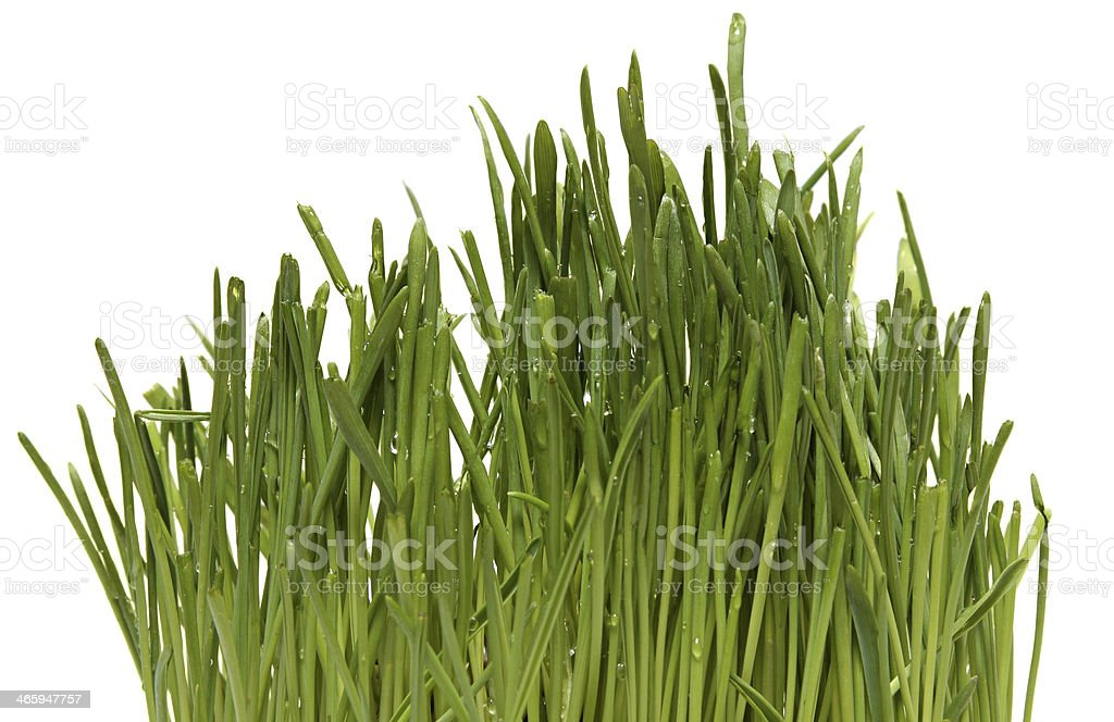 Fresh Green Grass with Drops Dew stock photo