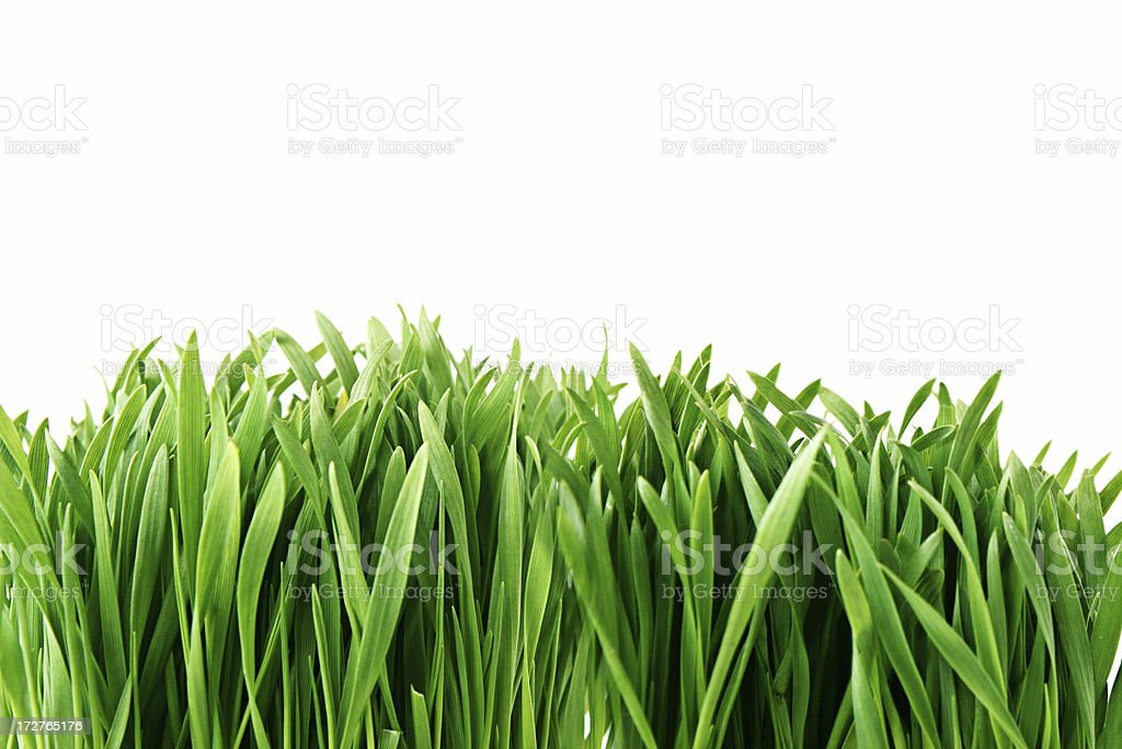 Fresh Green Growing Grass with Copy Space stock photo