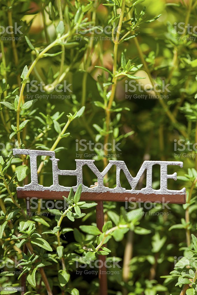 Fresh Green Herbal Thyme Leaves royalty-free stock photo