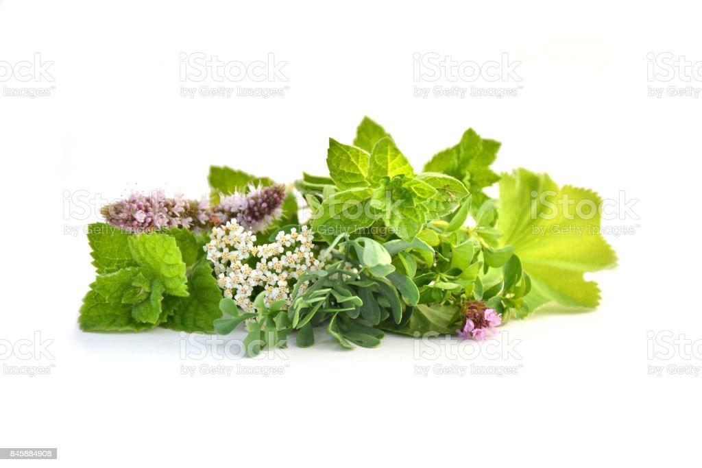Fresh green herbs isolated stock photo