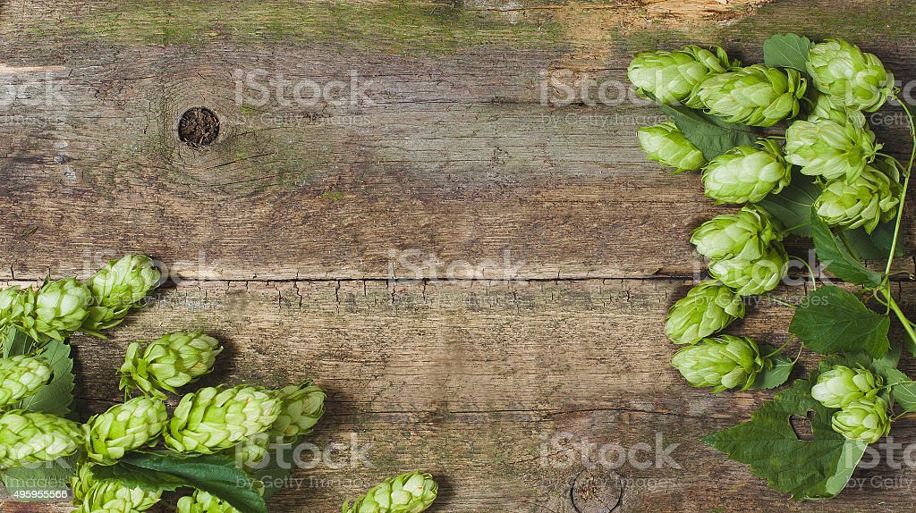 Fresh green hops on a wooden background stock photo