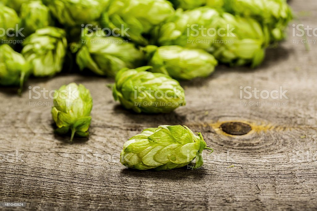 Fresh green hops on a wooden table stock photo