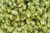Fresh green hops.  Texture. Background. Close-up.