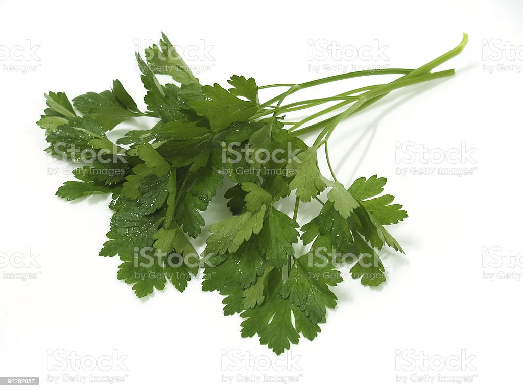 Fresh Green Italian Parsley royalty-free stock photo
