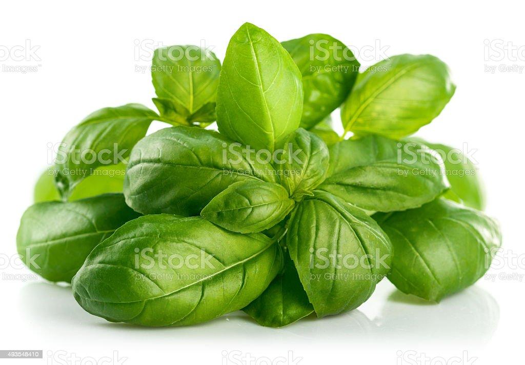 Fresh green leaf basil stock photo