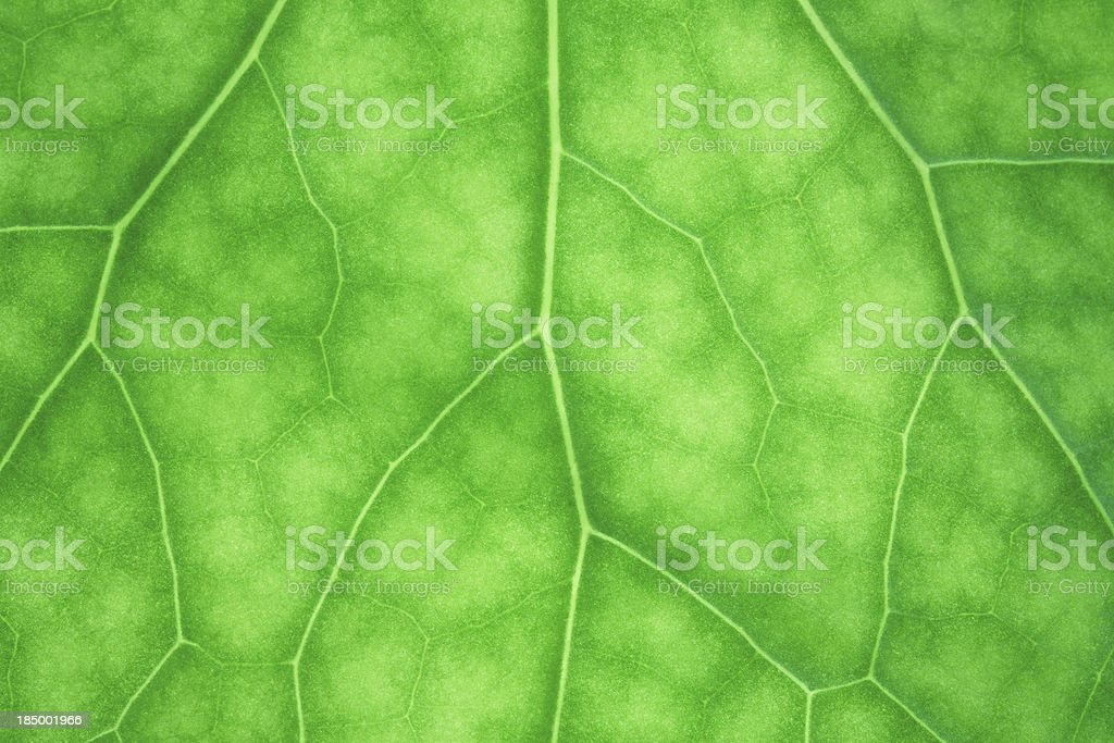Fresh Green Leaf Surface royalty-free stock photo