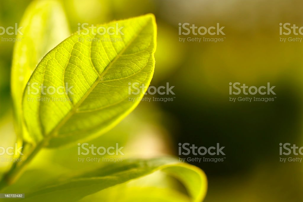 Fresh green leaf with soft background royalty-free stock photo