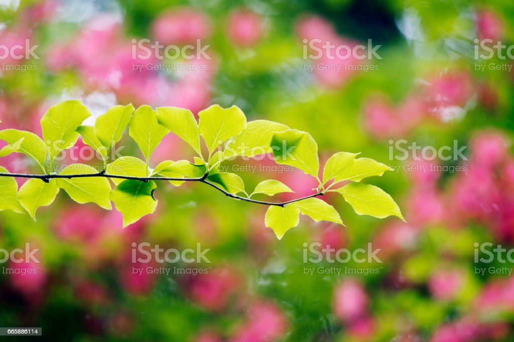 Fresh green leaves and flowers stock photo