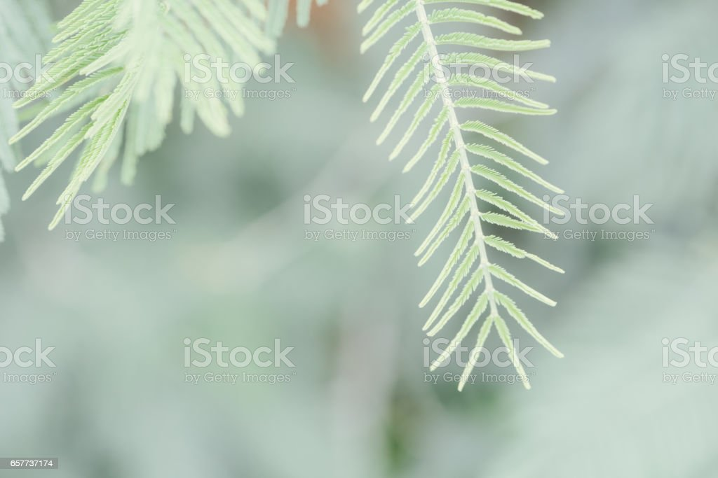 Fresh green leaves in nature blurry background stock photo