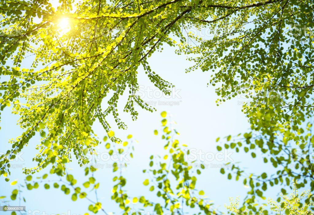 Fresh Green Leaves In Spring stock photo