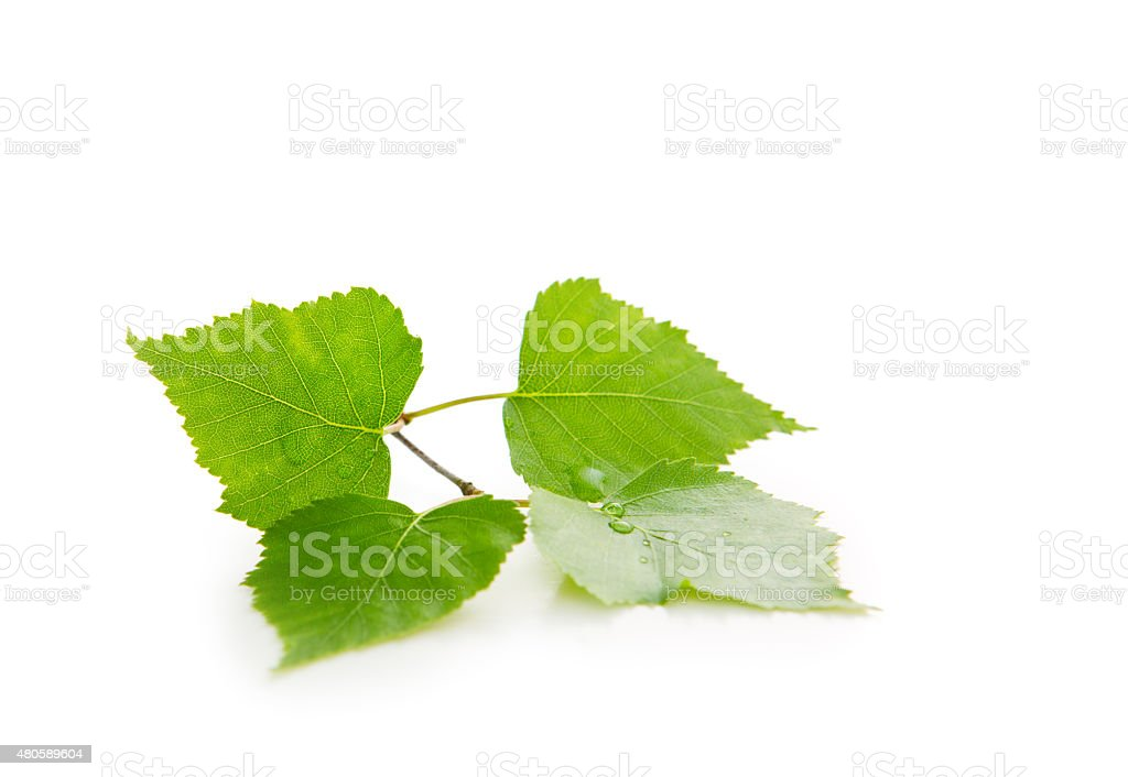 Fresh Green Leaves isolated. stock photo
