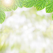 fresh green leaves ,natural green background.