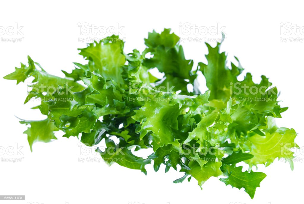 Fresh green leaves of endive frisee chicory salad isolated on white background in macro lense shot stock photo