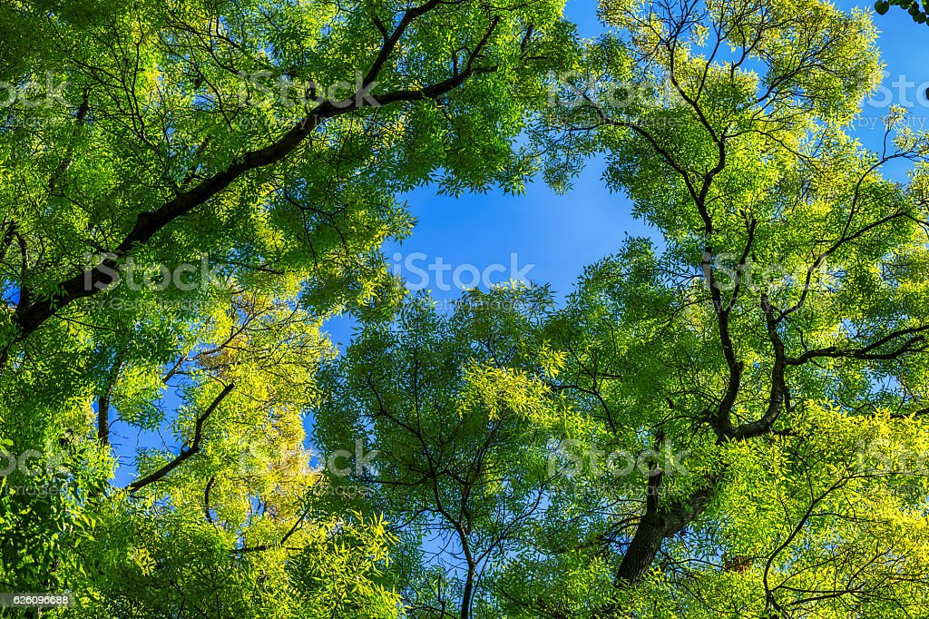Fresh green leaves on blue sky background stock photo