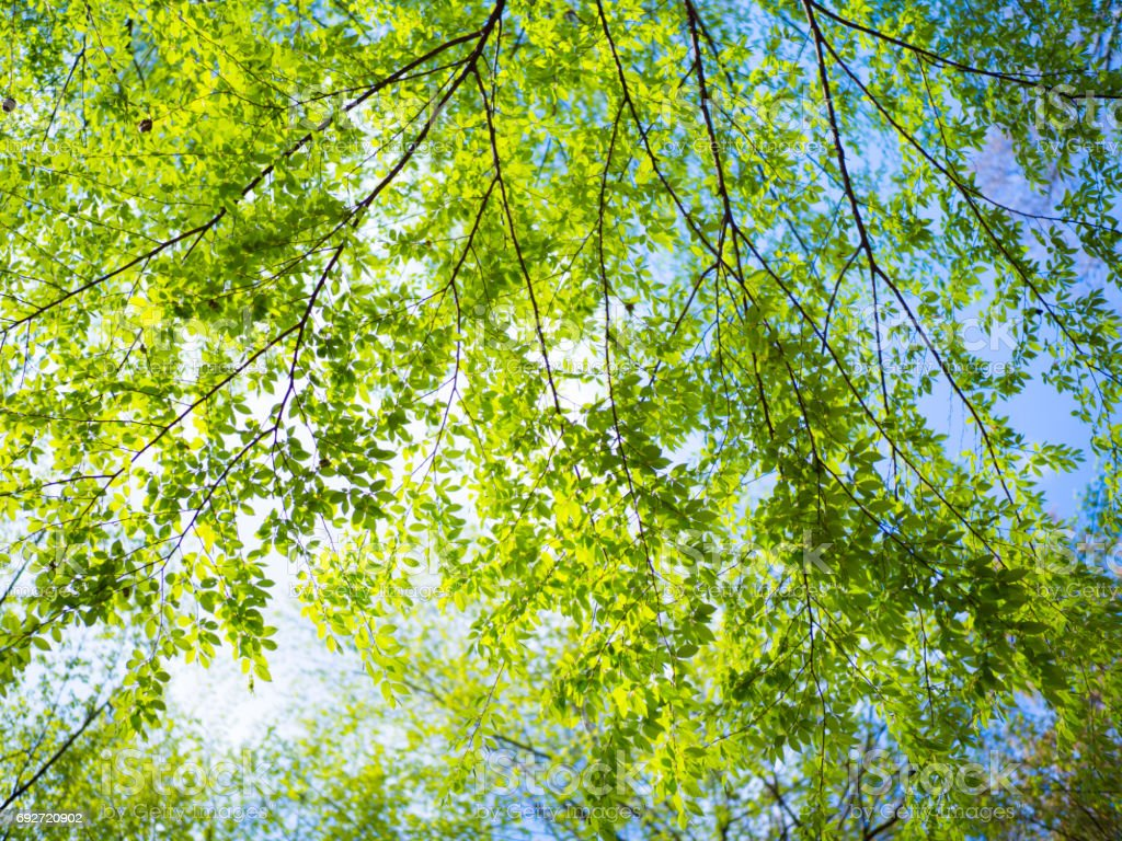 Fresh green leaves stock photo
