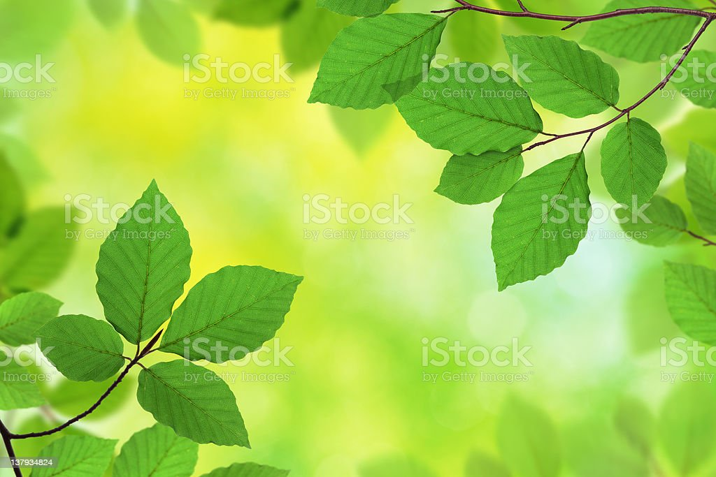 Fresh Green Leaves XXXL royalty-free stock photo