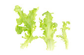 Fresh Green lettuce leaf salad ingredient size