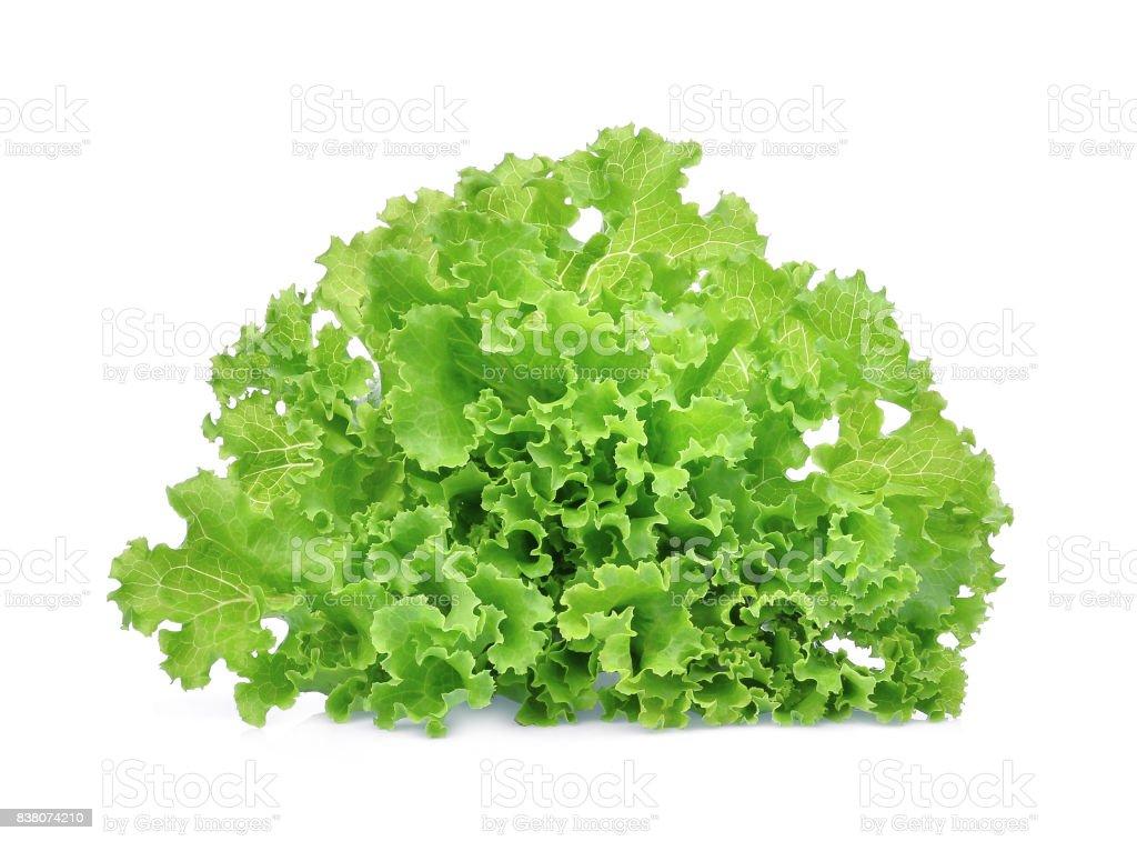 fresh green lettuce salad leaves isolated on white background stock photo