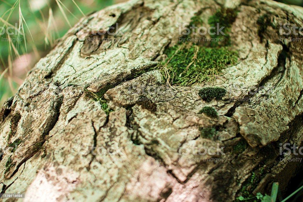 Fresh Green moss on tree royalty-free stock photo