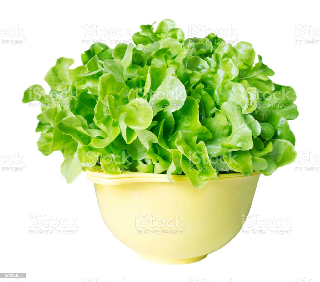 Fresh green oak lettuce on white background stock photo