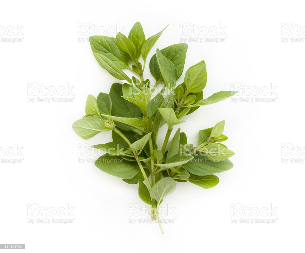 Fresh green oregano sprig on a white background stock photo