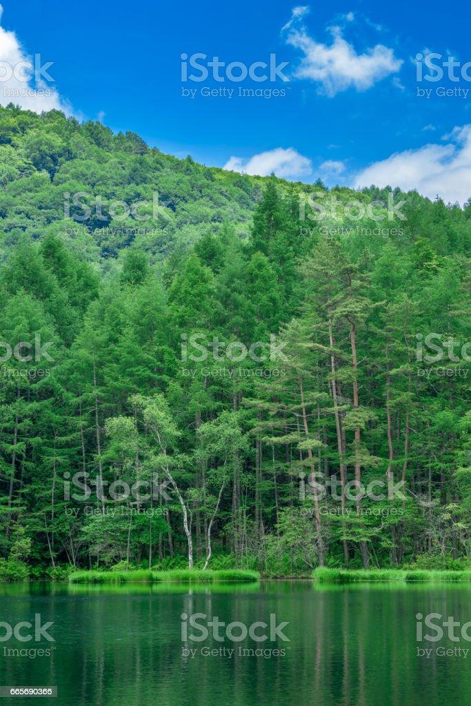 新緑の御射鹿池 stock photo