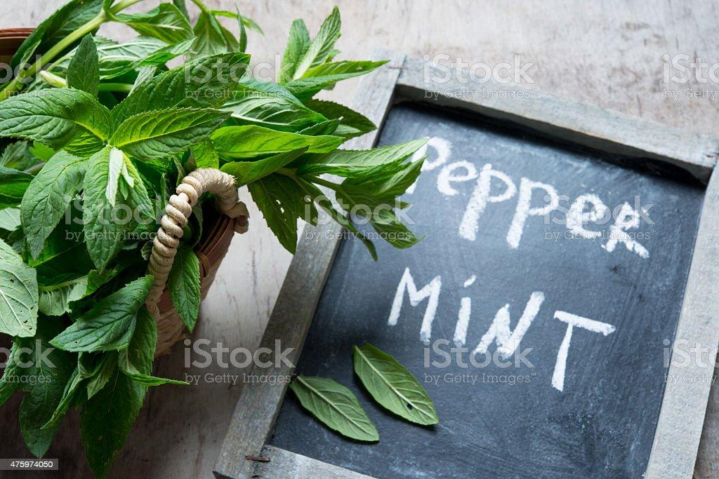 Fresh Green Pepper Mint stock photo