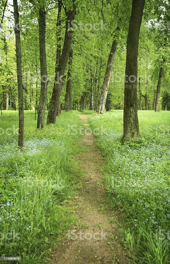 fresh green royalty-free stock photo
