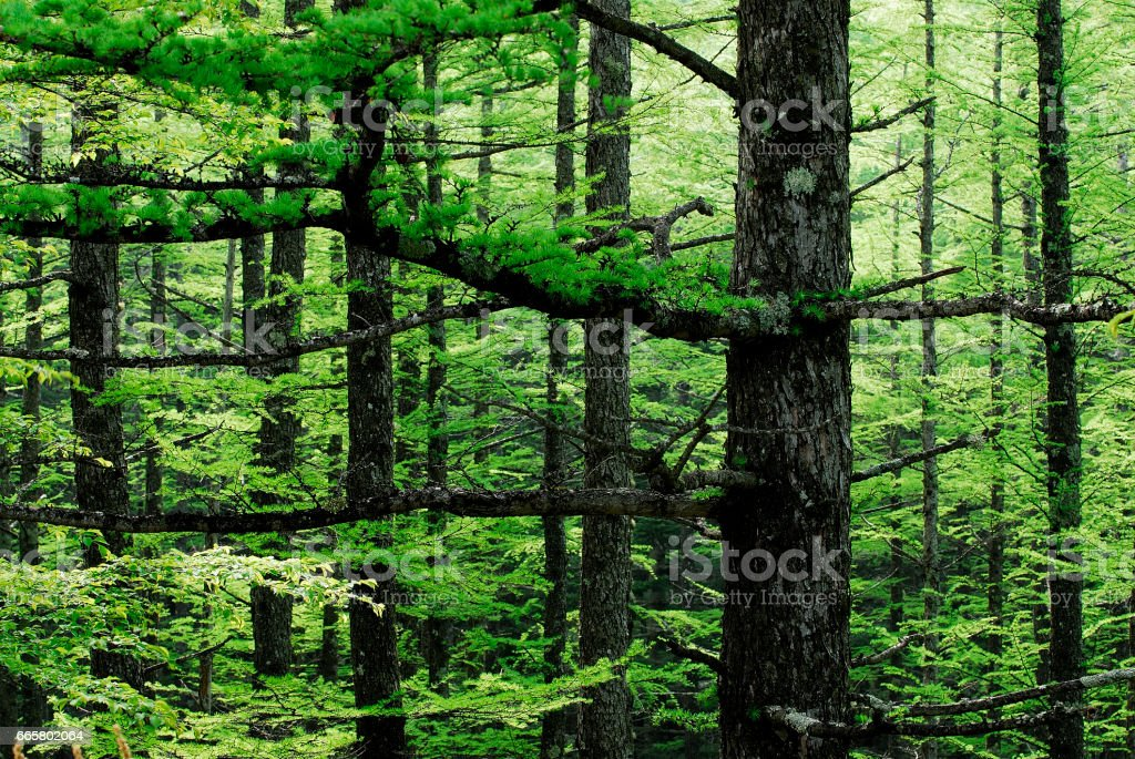 Fresh green stock photo