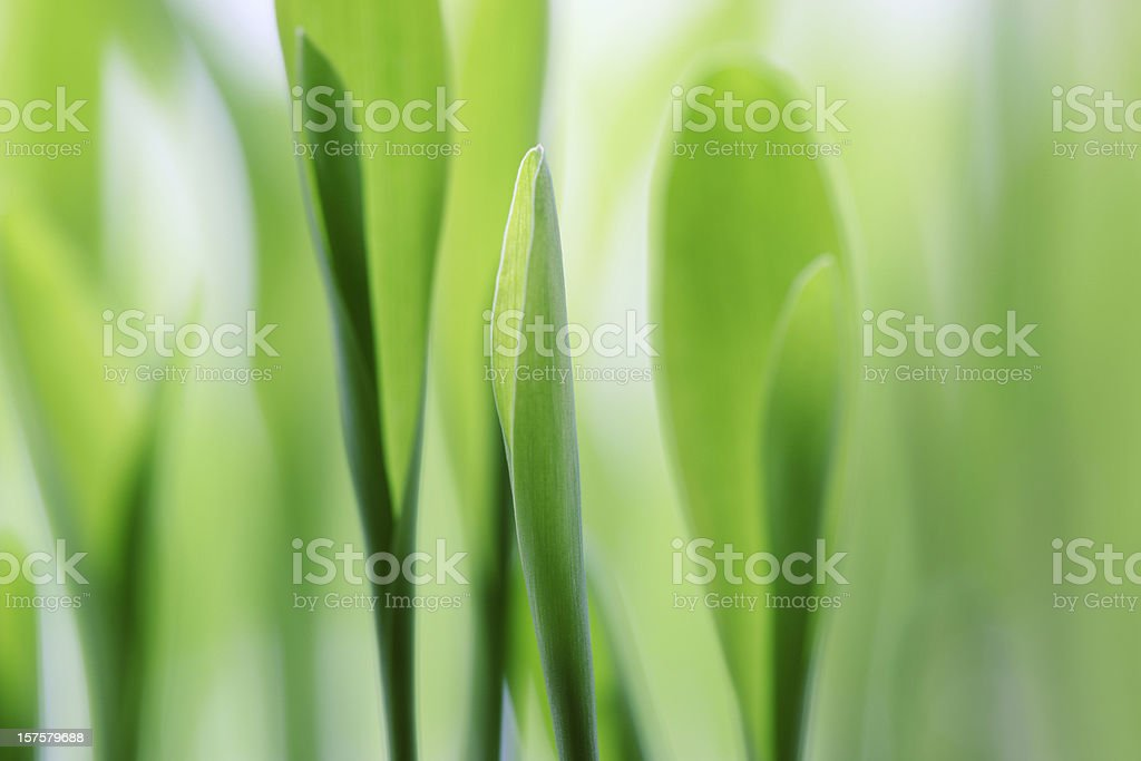 Fresh Green Plant Leaves royalty-free stock photo