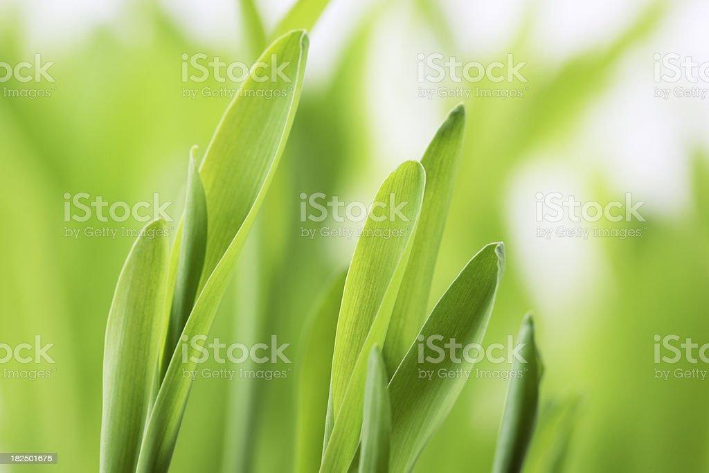 Fresh Green Plant Leaves royalty-free stock photo