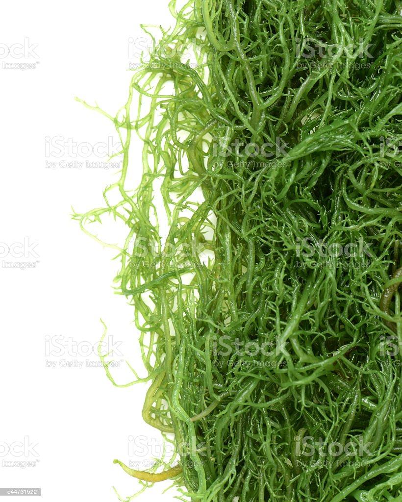 fresh green seaweed stock photo