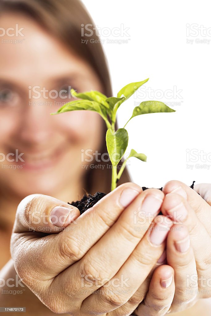 Fresh green seedling held in woman's hands royalty-free stock photo