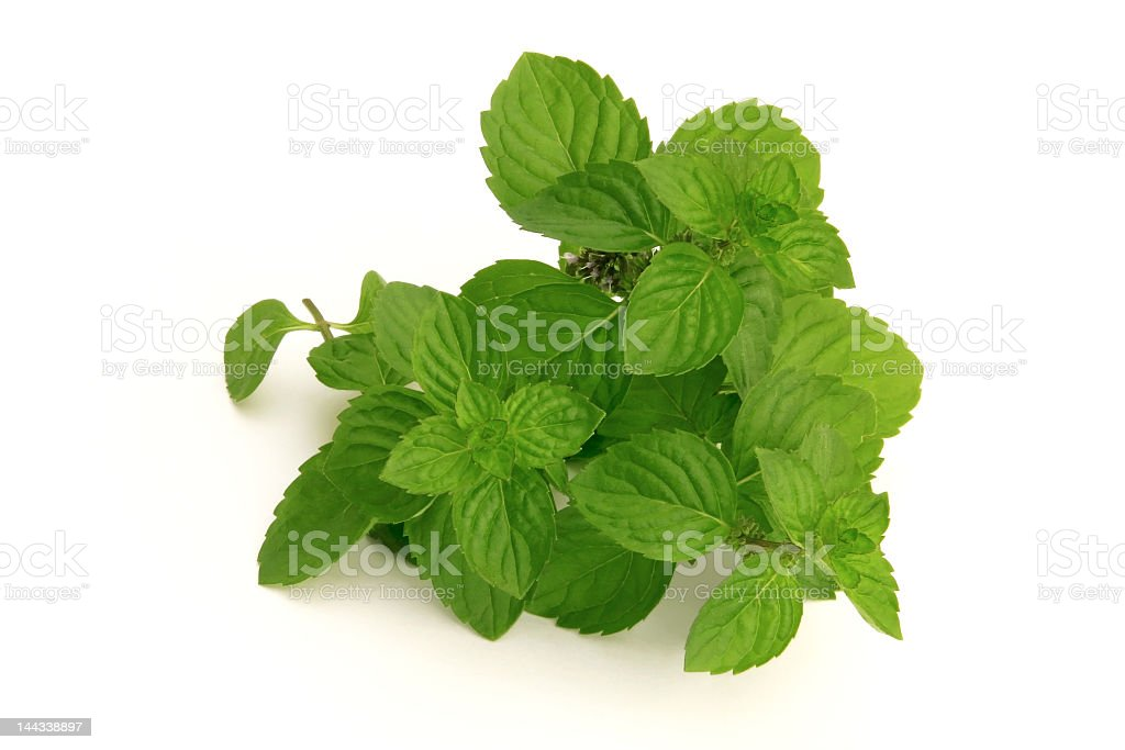 fresh green spearmint royalty-free stock photo