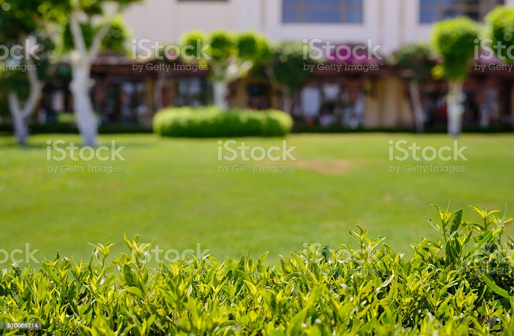 Fresh green summer hedge and lawn stock photo