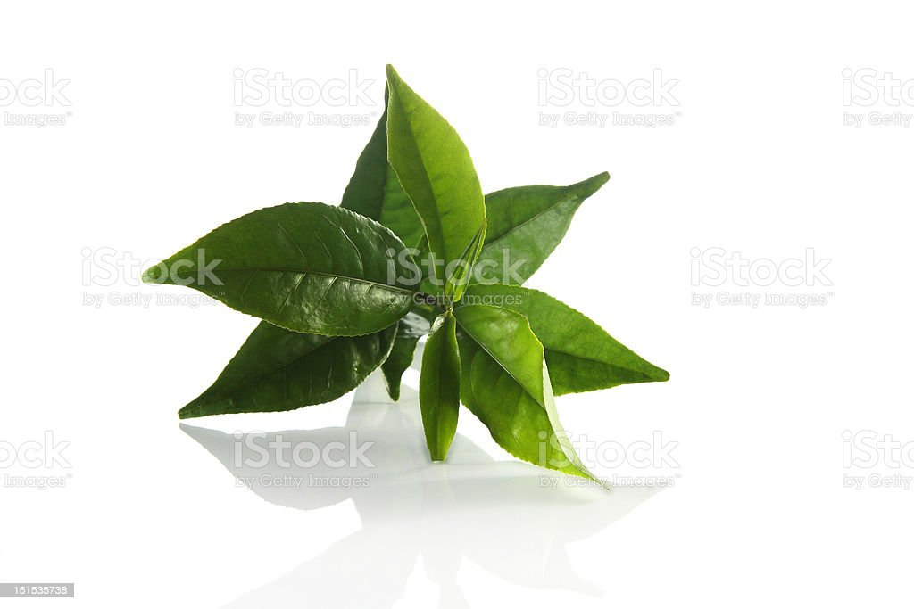 Fresh Green tea leaves royalty-free stock photo