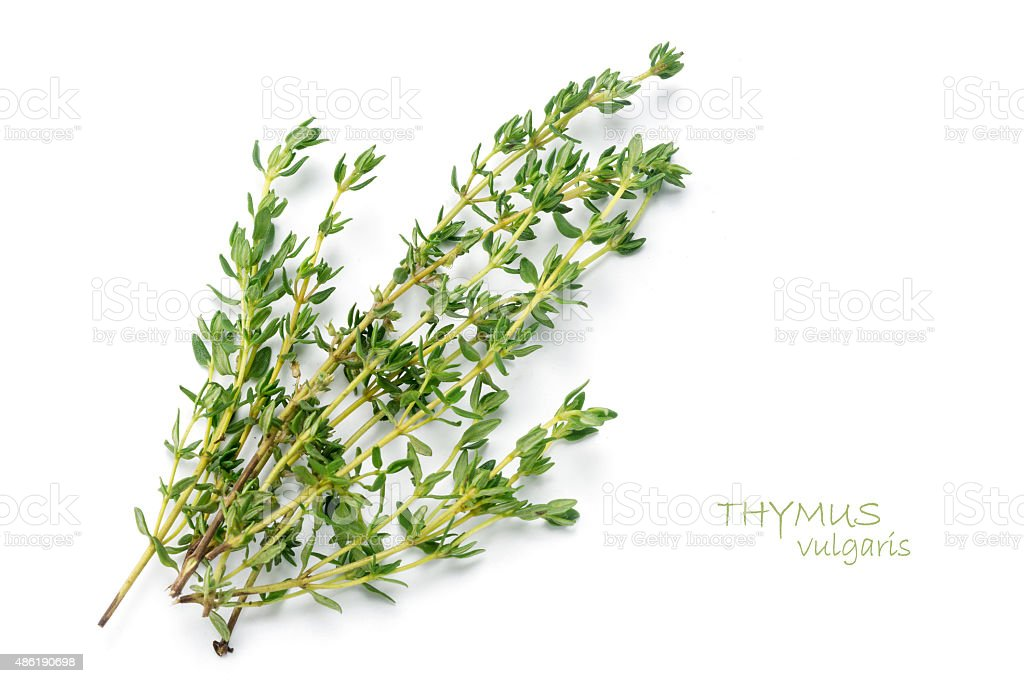 fresh green thyme, Thymus vulgaris, isolated on white stock photo