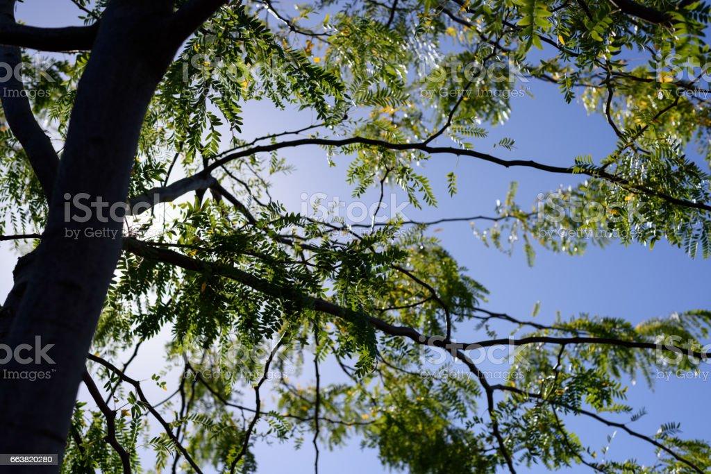 Fresh green tree and blue sky stock photo