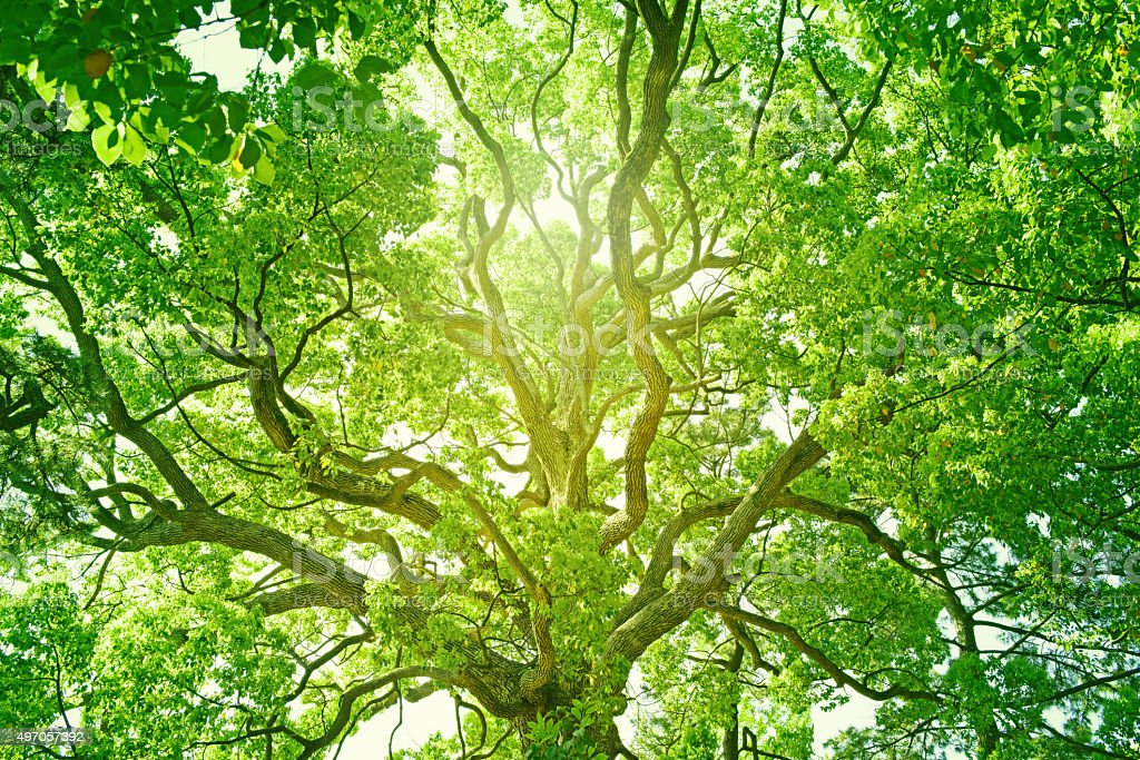 Fresh green tree stock photo