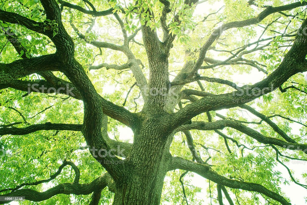 Fresh green tree stock photo
