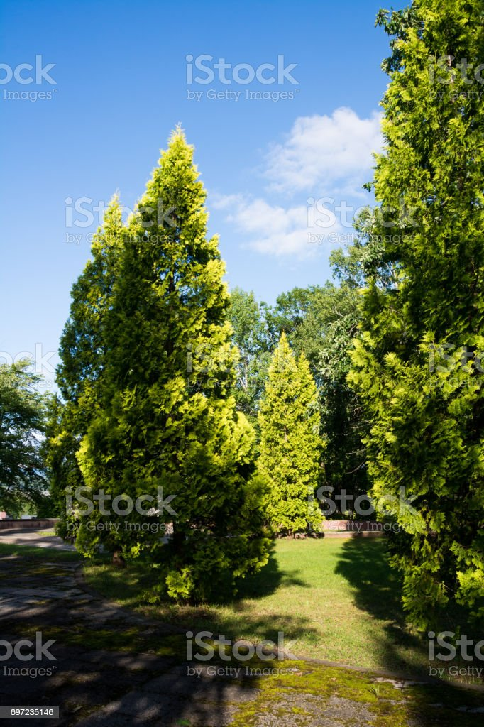 Fresh green trees bathed in the sunlight stock photo