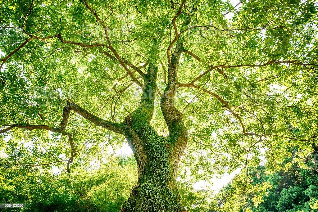 Fresh green trees stock photo