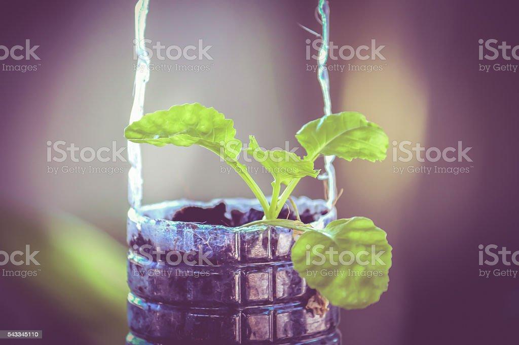 fresh green vegetable organic growing on plastic recycle bottle stock photo
