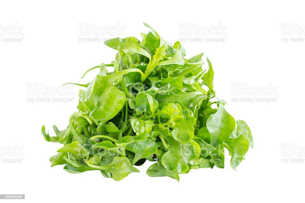 Fresh Green watercress salad ingredient stock photo