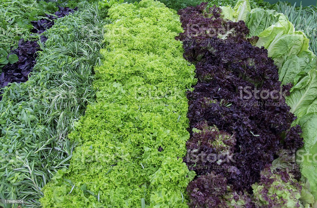 Fresh greens and lettuce on the counter market. royalty-free stock photo