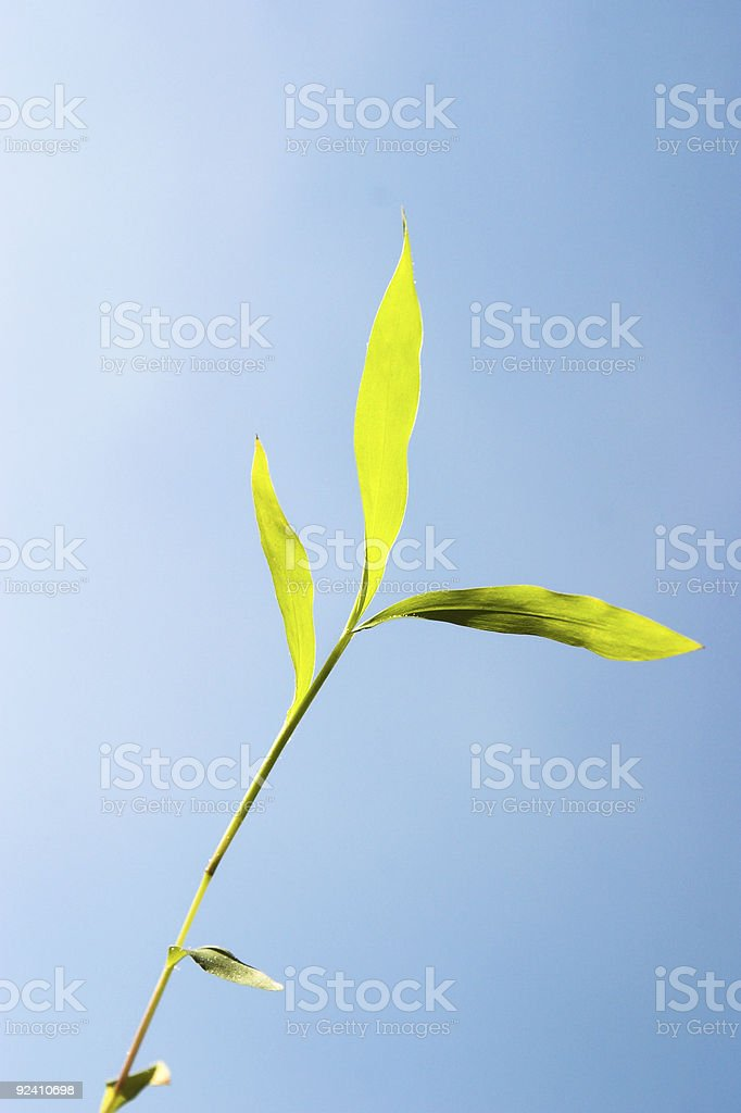 Fresh Growth royalty-free stock photo