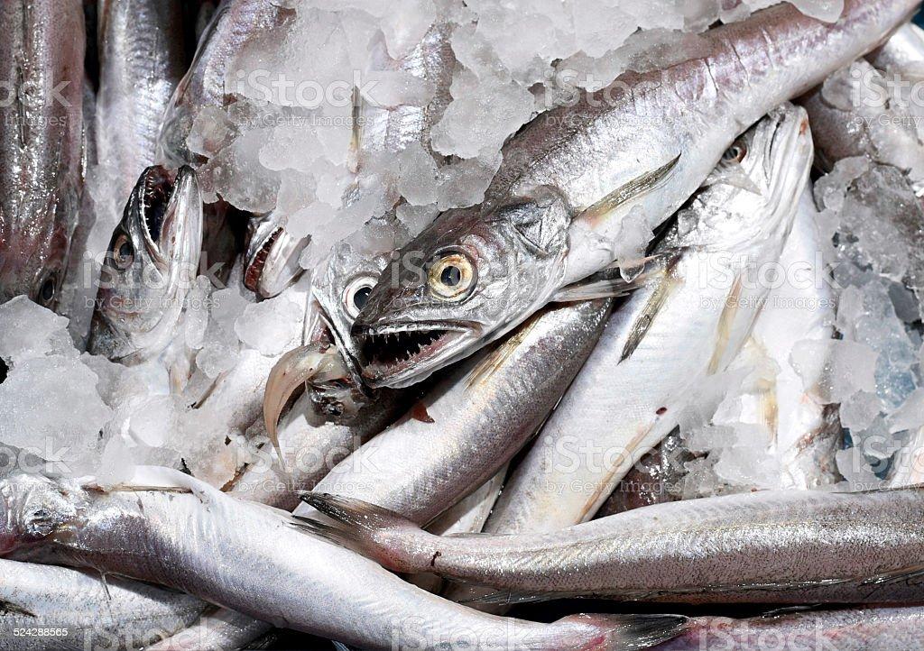 fresh hake stock photo