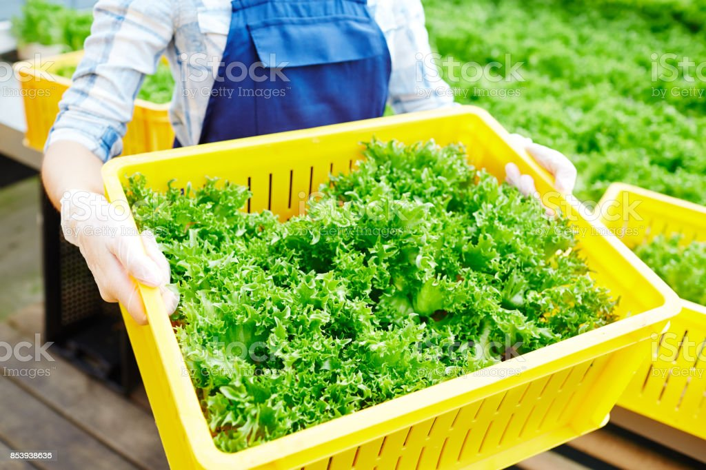 Fresh harvest stock photo